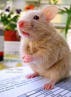 Adorable hamster picture photos photography