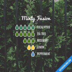 """ Minty Fusion - Essential Oil Diffuser Blend ""you got a min. Essential Oil Diffuser Blends, Doterra Oils, Doterra Essential Oils, Diffuser Recipes, Belleza Natural, Perfume, Earthy, Wellness, Cleaning"
