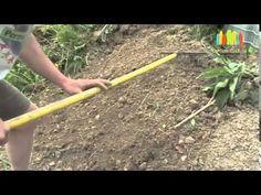 Comment démarrer un potager aujourd'hui - YouTube Plantation, Horticulture, Garden Tools, Hui, Nature, Parcs, Homestead, Gardens, Agriculture