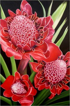 Torch Ginger by Anna Keay at Kai Pua - Anna Keay: Bright and Bold Tropicals