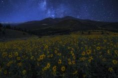 Field of Dreams by Peter Coskun on 500px