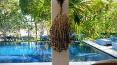 #Seeds #Açai Sementes de Açai dão um toque exótico a seu evento ao ar livre. #Casamento #Decoração #FLoral #Wedding #Trancoso #FloralDesign #paisagismo