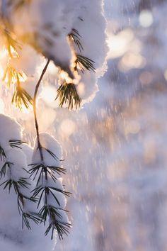 winterday tuyết (32.684).  sáng, độ sáng, ấn tượng, bùng phát, rừng, mây mù, mơ hồ, chiếu sáng, chiếu sáng, ánh sáng, sương mù, thực vật, th...