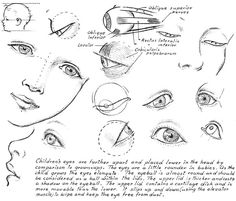 Drawing Eyes from How to Draw Nearly Everything: Dover Pub. Weekly Samples