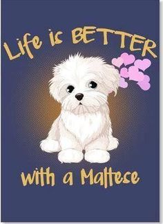 34 Super Ideas For Dogs Maltese Doggies Cute Puppies, Cute Dogs, Dogs And Puppies, Doggies, Animals And Pets, Baby Animals, Cute Animals, Young Animal, Maltese Dogs