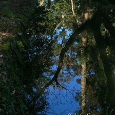 【makotosai10】さんのInstagramをピンしています。 《飛び込んだら別世界へ?! #小川 #森 #水面 #鏡 #鏡像 #青空 #京都府立植物園 #京都 #brook #forest #wood #surface #mirror #mirrorimage #sky #bluesky #kyotobotanicalgarden #kyoto》