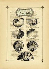 shell print.