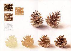 pinecone - pomme de pin ou pigne de pin/ Cath-aquarelle - aquarelle C.Zugmeyer