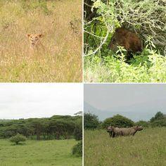 Nairobi National Park Nairobi, National Parks