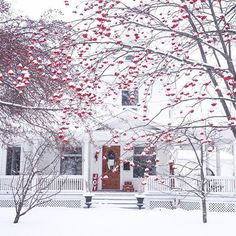 Need one of these trees at the next house