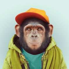 """zooportraits: """" CHIMPANZEE by Yago Partal for ZOO PORTRAITS """""""