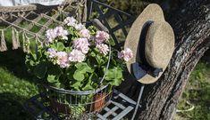 Stell av Pelargonia - Hageland Cowboy Hats, Planter, Spring