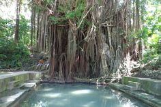 Siquijor Balete Tree/could turn it into a home