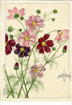 Shodo Kawarazaki - Botanical Print