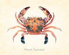 Antique Crab Plate 1 1903 Natural History Art Print 8 x 10 Home Decor Beach Decor Nautical Sea. $10.00, via Etsy.