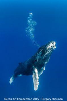 Ocean Art Photography Winners Show the Alien Beauty of Life Underwater