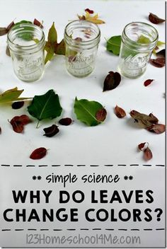 Why Do Leaves Change Color?  Find out with this simple, fun, and informative Science Experiment for kids in preschool, kindergarten, 1st grade, 2nd grade and older too.  Perfect fall activities for kids. (homeschool, science) AWESOME EXPERIMENT! MUST TRY!!!