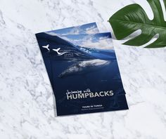 Lose your heart to the ocean and find your soul! Travel brochure for Majestic Whale Encounters  #creatik #design #creatikdesign #creativeagency #sydneydesignstudio #creatives #graphicdesign #layoutdesign #photography #printdesign #typography #publication #minimalist #minimaldesign #lessismore #cleandesign #adobe #logo #logodesign #branding #brandidentity #rebrand #gooddesign #marketing #sutherlandshire #shiredesign #designsutherland #cronullasutherland