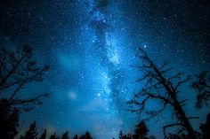 Galactic Forest. Photos of starry Finnish nights by Oscar Keserci Photography on bored panda