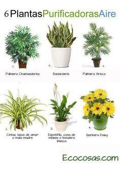 Aspidistra cheflera filodendro y selaginella plantas for Plantas de interior fotos y nombres