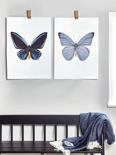 The perfect statement piece for your wall, our entomological prints feature quality macro photographs of butterflies. Our Deep Blue Butterfly print features electric blue and vibrant yellow details, while our Faded Blue Butterfly Print is a soft cornflower shade with soft black edging. Hang both together for a striking effect. Either can be hung with our Oak Picture Clip.