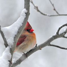 BIrd on branch in snow