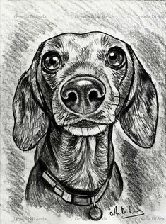 The 14 Nicest Dachshund Paintings Dog Pencil Drawing, Dachshund Drawing, Pencil Portrait Drawing, Pencil Drawing Tutorials, Dachshund Art, Pencil Drawings, Painting & Drawing, Art Drawings, Dapple Dachshund