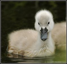 When you grow up you will be an elegant swan.