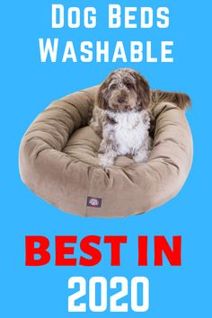 Top 5 Best Dog Beds Washable in 2020 amazon.check the best price and best deal. #ads #dogbed #washabledogbed #dog #animal #bestdogbeds #top5dogbeds Dog Beds For Small Dogs, Cool Dog Beds, Large Dogs, Bean Bag Chair, Ads, Amazon, Check, Animals, Big Dogs