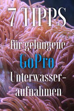 Tauchen in #Australien. Hier findest du 7 hilfreiche Tipps für gelungene Unterwasseraufnahmen mit einer #GoPro Kamera