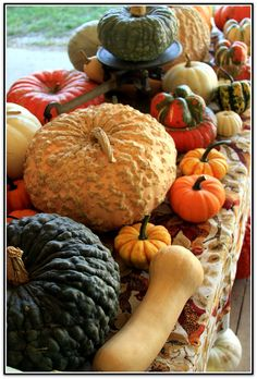Gourds...I love autumn...I wish I could find recipes to use all the varieties not just the pumpkins!