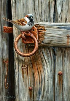 All images are the original artwork of nature artist and wildlife artist Dr. Jeremy Paul and are protected by international copyright laws. Watercolor Bird, Watercolor Paintings, Sparrow Art, Instalation Art, Afrique Art, Bird Drawings, Bird Pictures, Wildlife Art, Animal Paintings