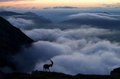 10 bellissime foto di natura - Il Post
