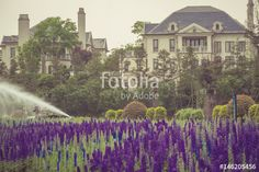Image result for lavender field in formal garden