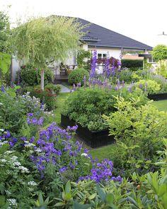 In the garden of Everlasting Happy ♥: Summer exuberance - My garden is in full flower