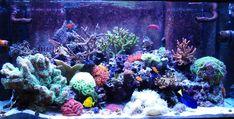 Tank Quality Water | Flowerhorn