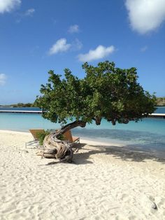 Curacao's Best All-Inclusive Resort | Where to Stay in Willemstad Curacao | All-Inclusive Island Vacations | Divi