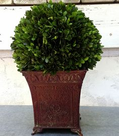 Preserved Boxwood Ball 16 Inch