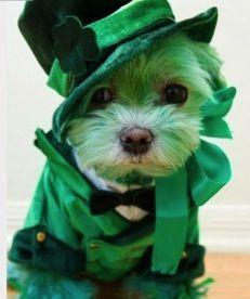 Happy St Patricks Day Also Happy Birthday Anyone On March