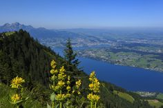 Rigi Staffel – Känzeli – Kaltbad – First - Felsenweg Lake Lucerne Switzerland, Walking Holiday, Hiking Trails, Journey, Adventure, Mountains, Landscape, City, Travel