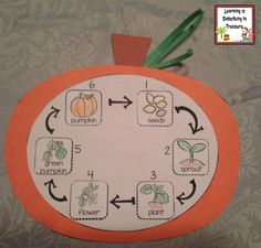 This pumpkin life cycle craft is part of a pumpkin day pack with 10 engaging hands on centers!