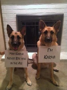 Karma - great name for a big dog - especially for a K9 working for the military, border patrol, or police!!!