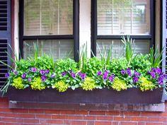 A Proper Bostonian: Beacon Hill Window Boxes