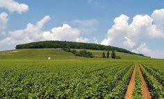 Champagne region Champagne Region, Vineyard, Public, France, Travel, Outdoor, Vine Yard, Voyage, Trips