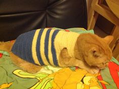 A sweater for my cat