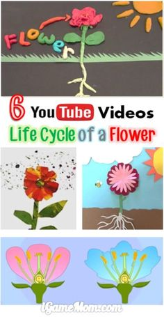 6 YouTube videos about life cycle of a flower -- fun science video for preschool kids to learn plant science. A fun nature STEM resource to watch with kids before planting flowers in the garden