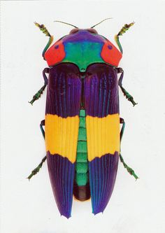 Jewel Beetle. The Insect Art of Christopher Marley.