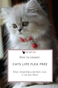 Most commonly found in the United States, Cat Fleas are extremely common wingless, parasitic insects infesting dogs, cats, rats and some other wild rodents. Cat Fleas, Cat Life, Conservation, Adoption, Pet Tips, Pets, Nyc, Animals, Foster Care Adoption