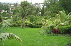 Scenic tropical lawn setting #nice #green #lawn