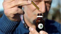 #Santa Fe, a un paso de producir cannabis medicinal para la salud pública - Diario UNO de Entre Ríos: Diario UNO de Entre Ríos Santa Fe, a…